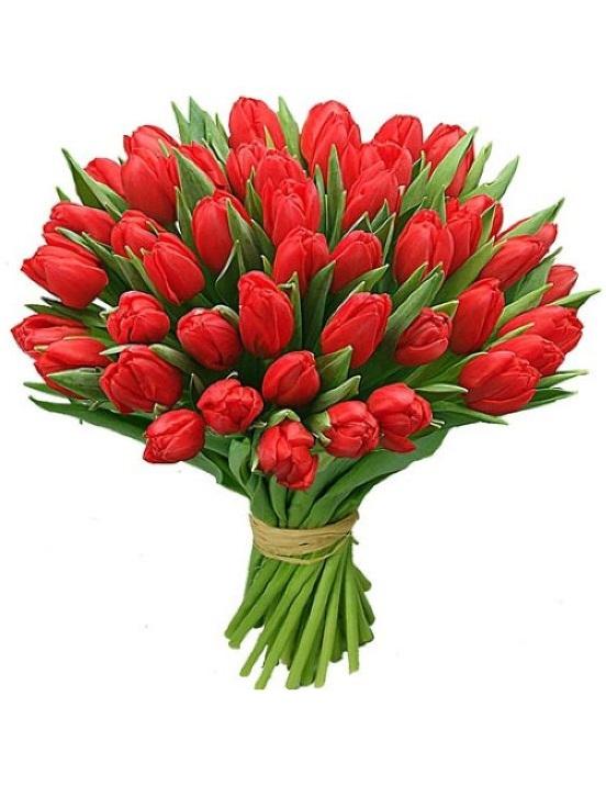 17__красные_тюльпаны